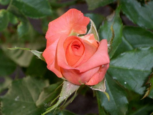 La flor de la vida...