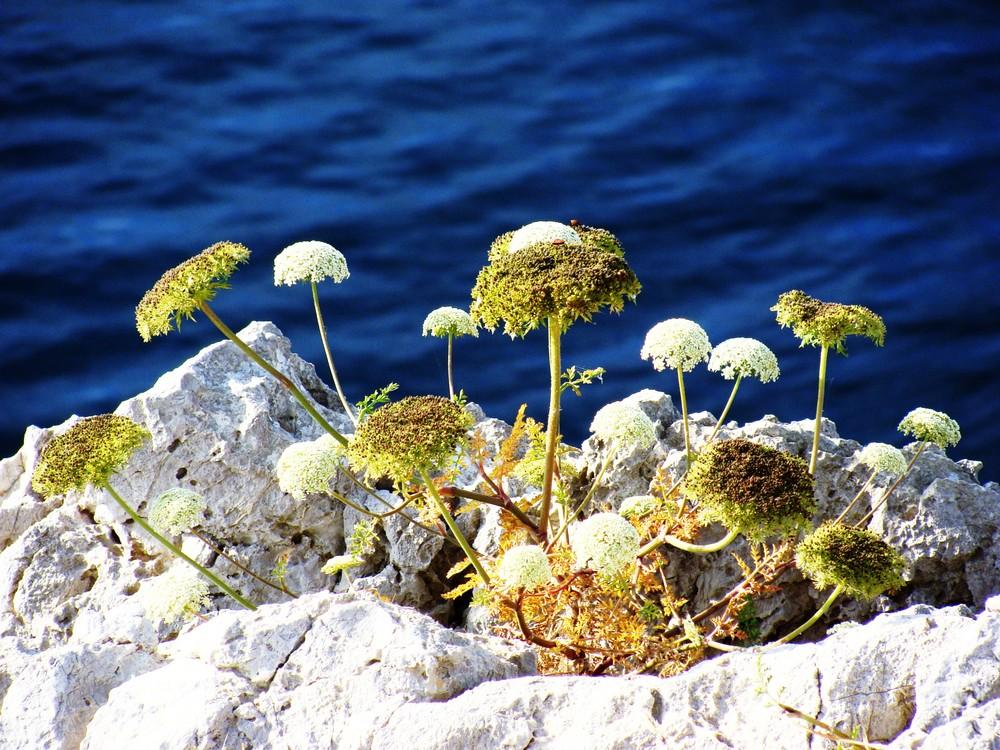 la flor de la vida
