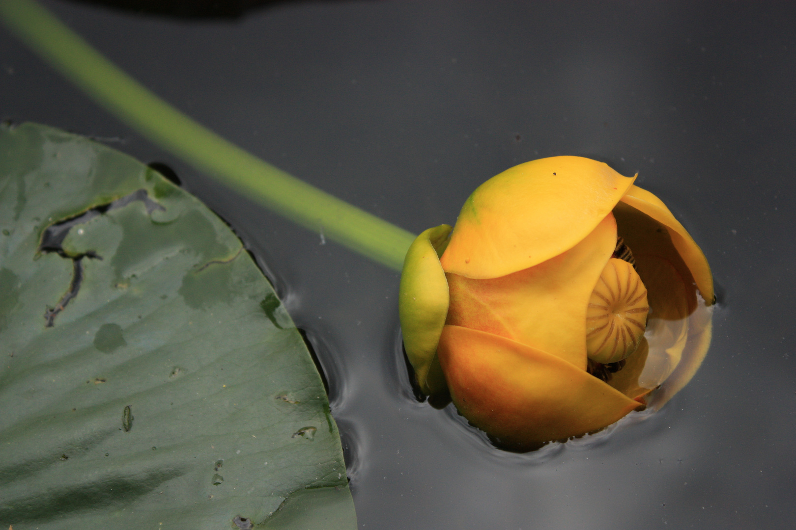 La flor en el pantano!