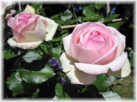 La Flor Encanta
