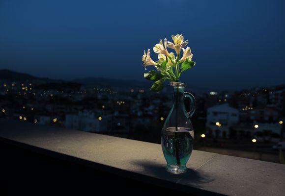 """""""La flor nocturna """""""