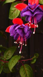 La Flor que Baila