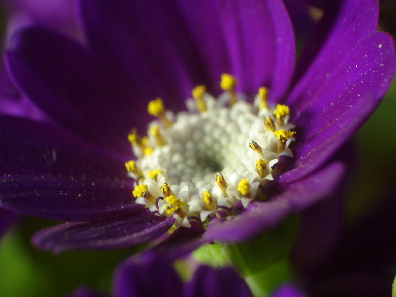 la flor que son muchas flores......