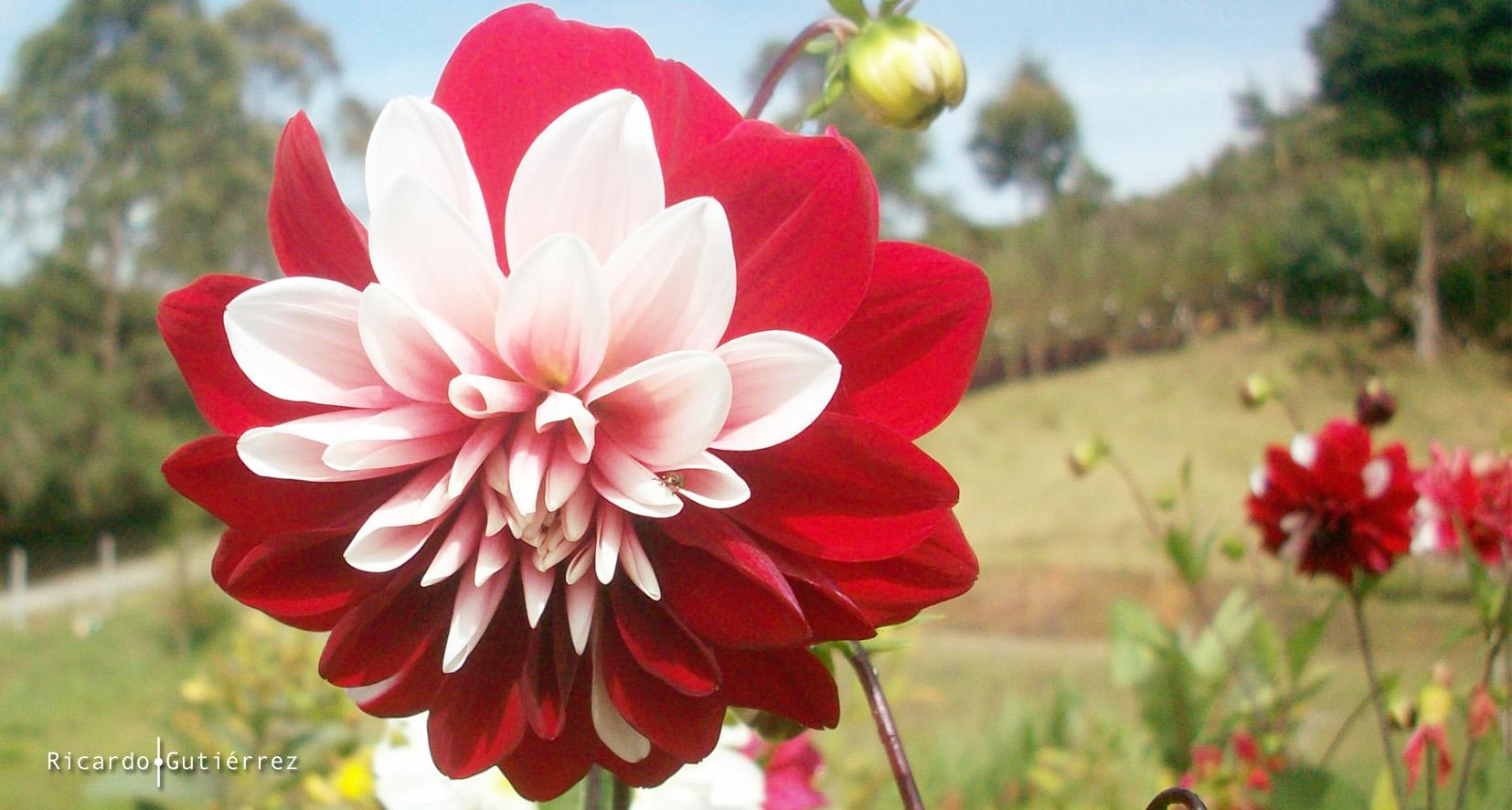 La flor, Rionegro-Colombia