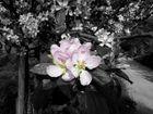 La floraison - une lueur d'été