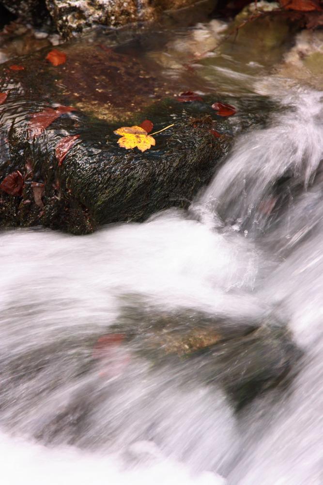 La foglia d'autunno von campana giacomo