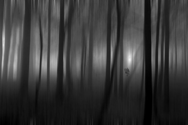 La foglia nel bosco