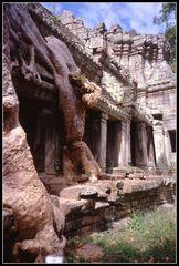 La foresta pluviale..Cambogia