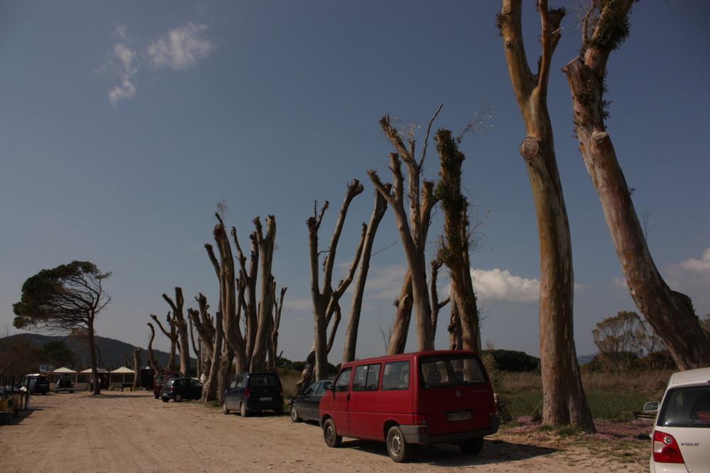 La foresta violata