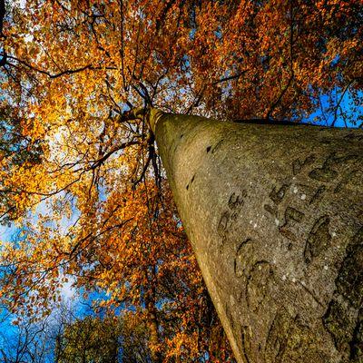 La foret de l'Isle Adam à l'automne