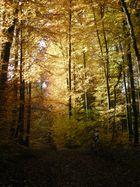 La forêt, à vtt...