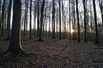 La forêt de Clermont, Oise