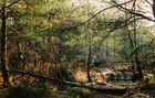 la forêt de fontainebleau en hiver