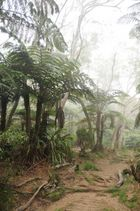 La forêt enchantée...