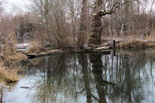 la forêt figée par le froid !