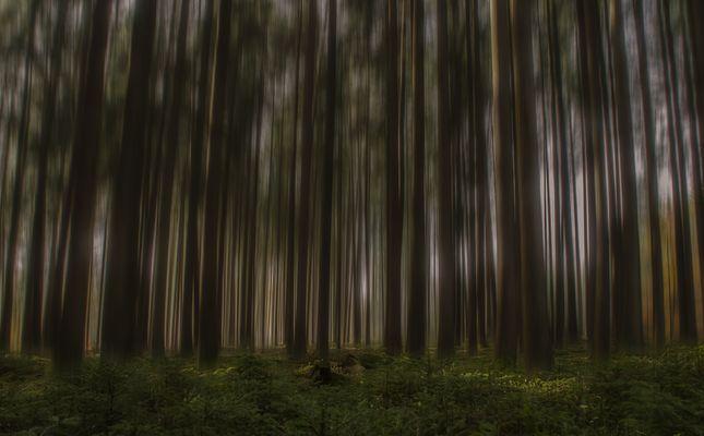 La forêt floue!