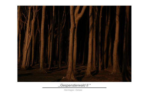 la forêt mystique