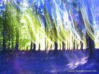 La forêt rêve
