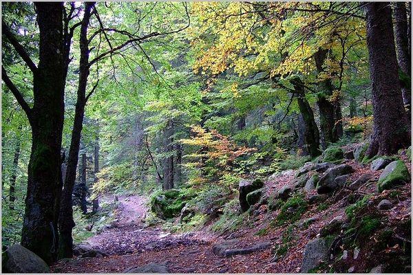 La forêt Vosgienne au début de l'automne
