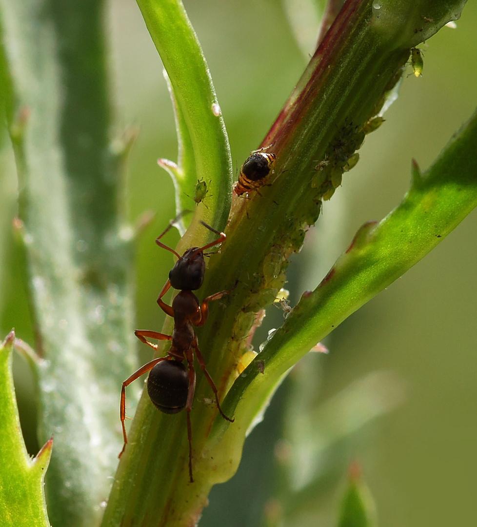 La fourmi (2)