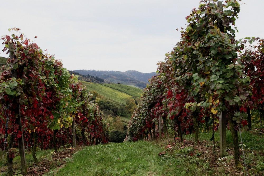 la fête des vignes!