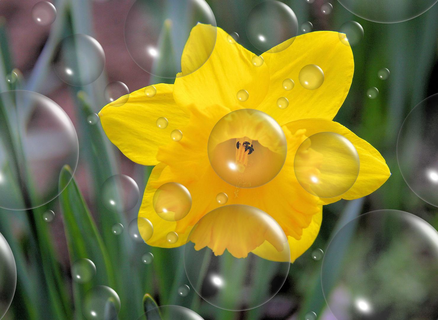 la fête du printemps!