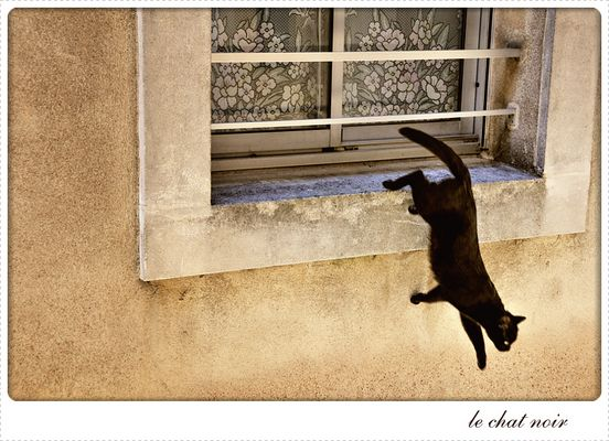 La fugue du chat noir de Verdun