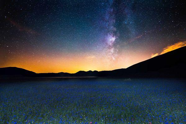 la gara fra i fiori e le stelle