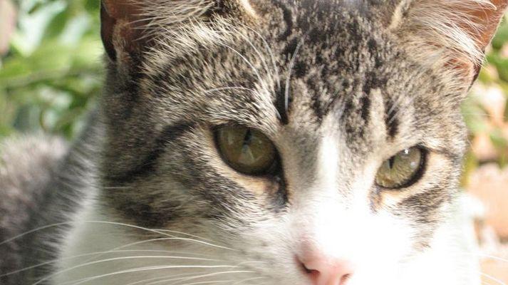 La gata de la casa de los abuelitos / Cat in the grandparents home
