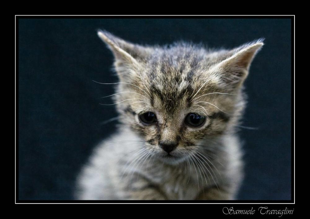 La gattina