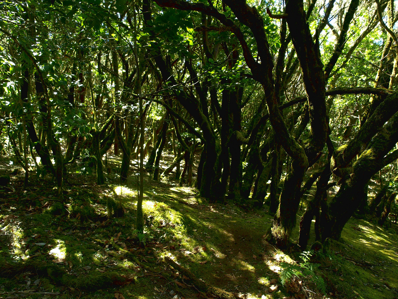La Gomera Dschungel