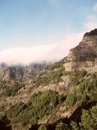 La Gomera-Nebelwald