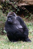 La gorille