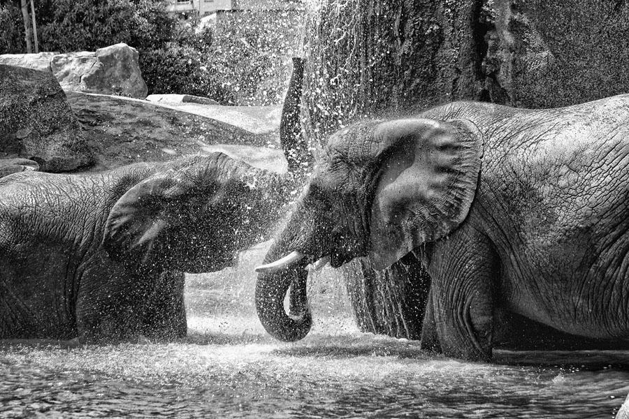 La gran ducha!