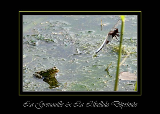 La grenouille et la Libellule
