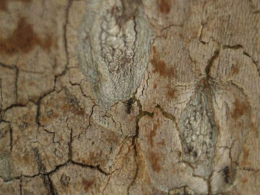 La hormiga sube al arbol