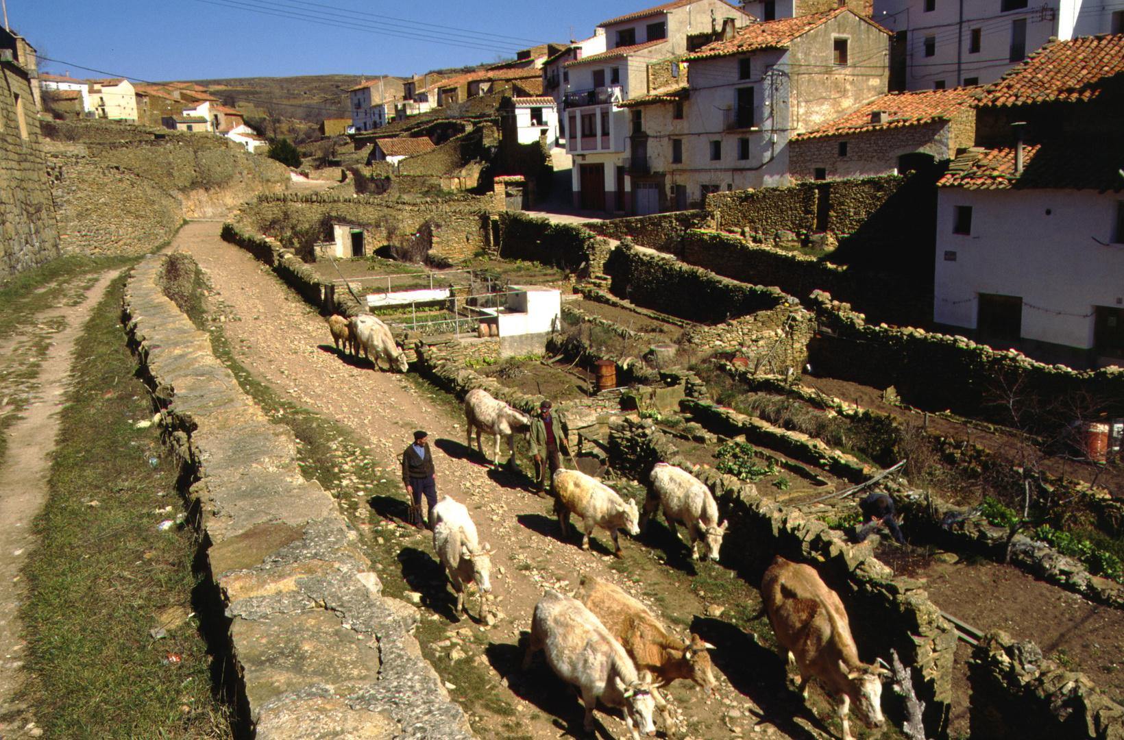 La Iglesuela del Cid, Schafhirte (1996-03)