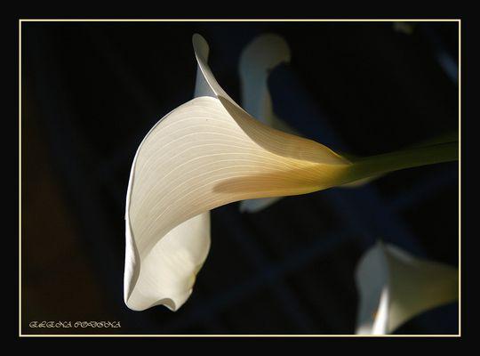 La ilusión de una flor