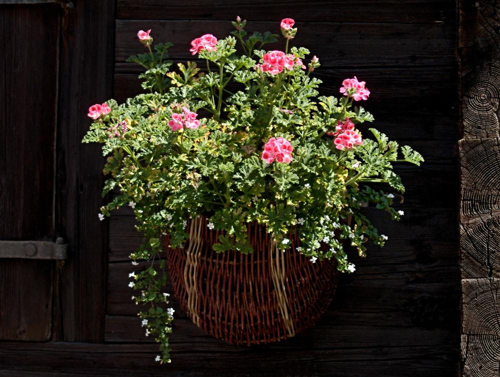 La jardinière d'été