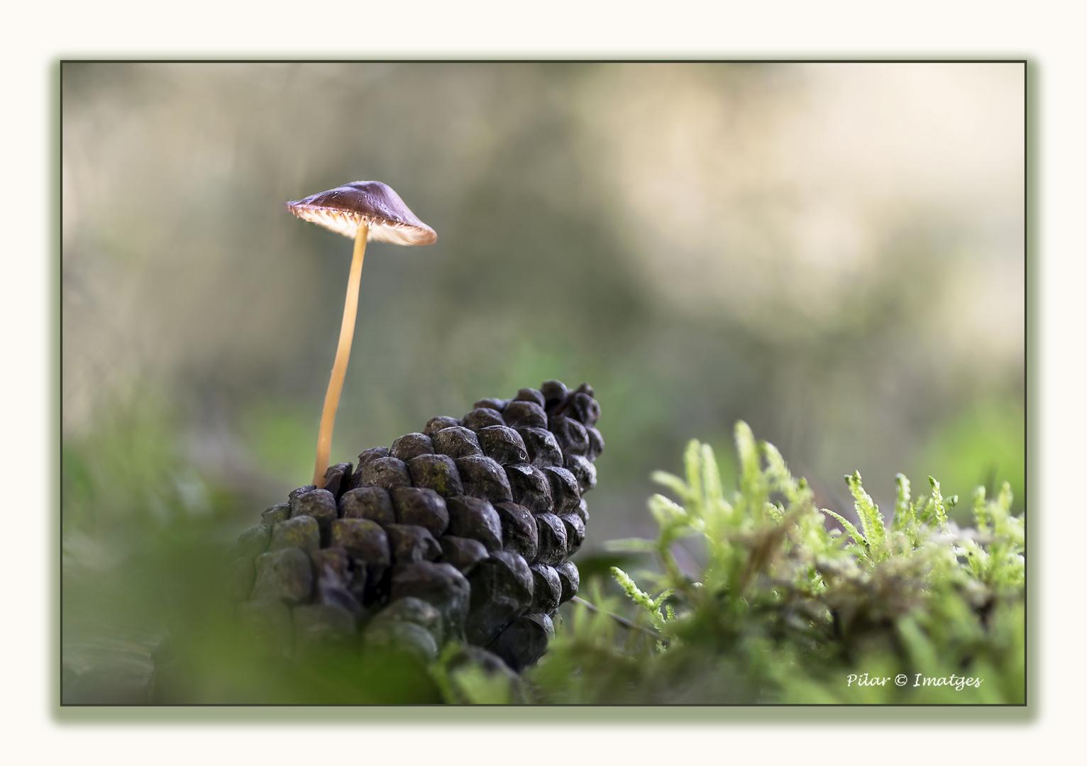 La lamparita del bosque