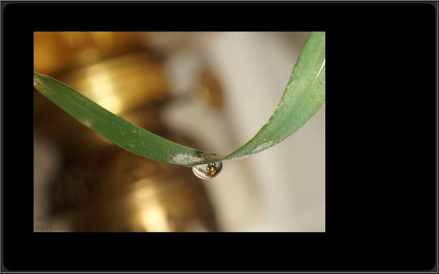 La Lampe goutte d'eau