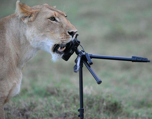 La Lionne Photographe
