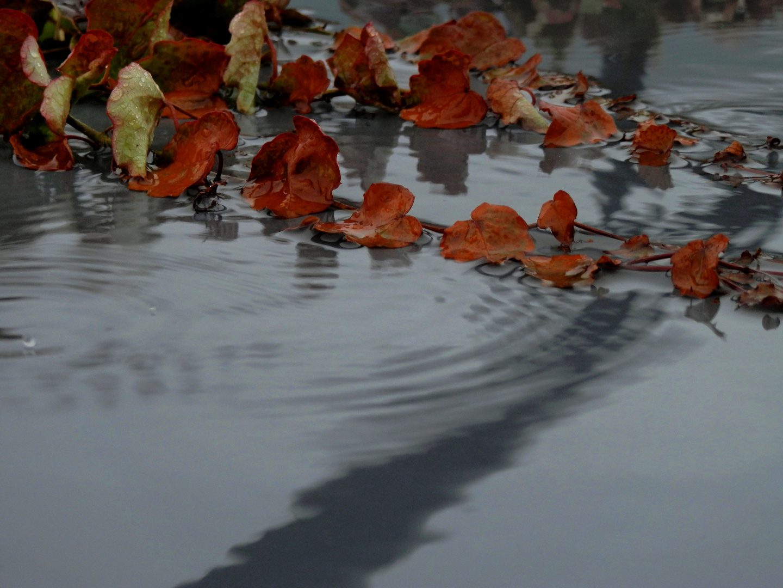 La lluvia 2