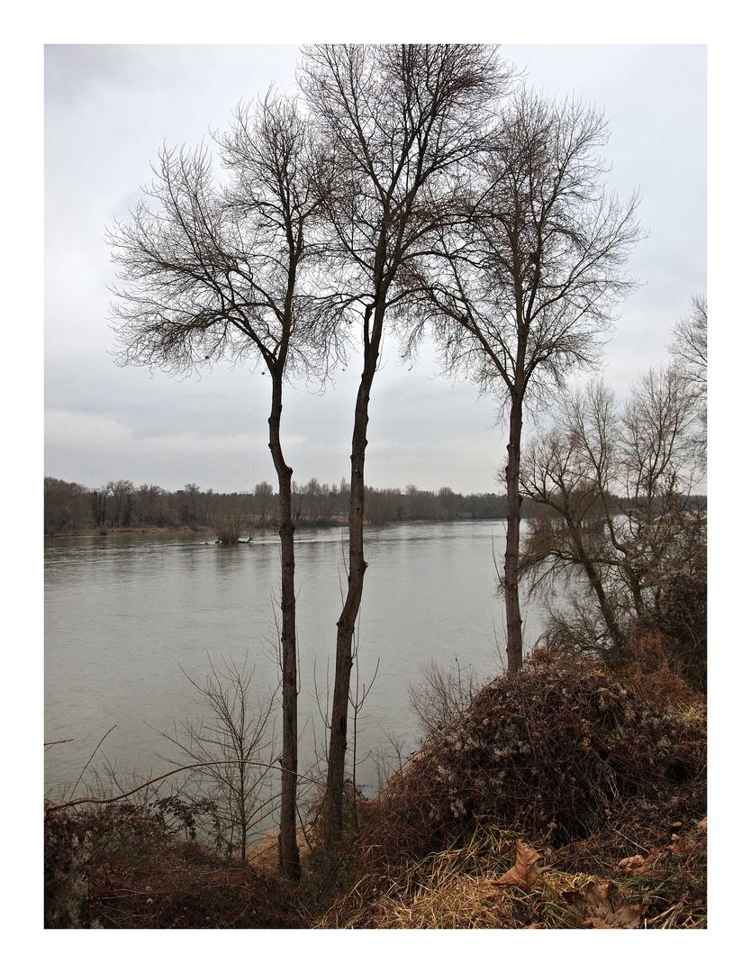 La Loire à Saint Ay