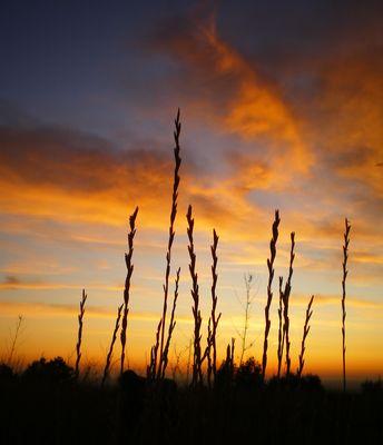La luce dell'alba scaccia la tenebra dell'anima