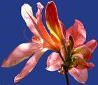 La luce di un fiore.