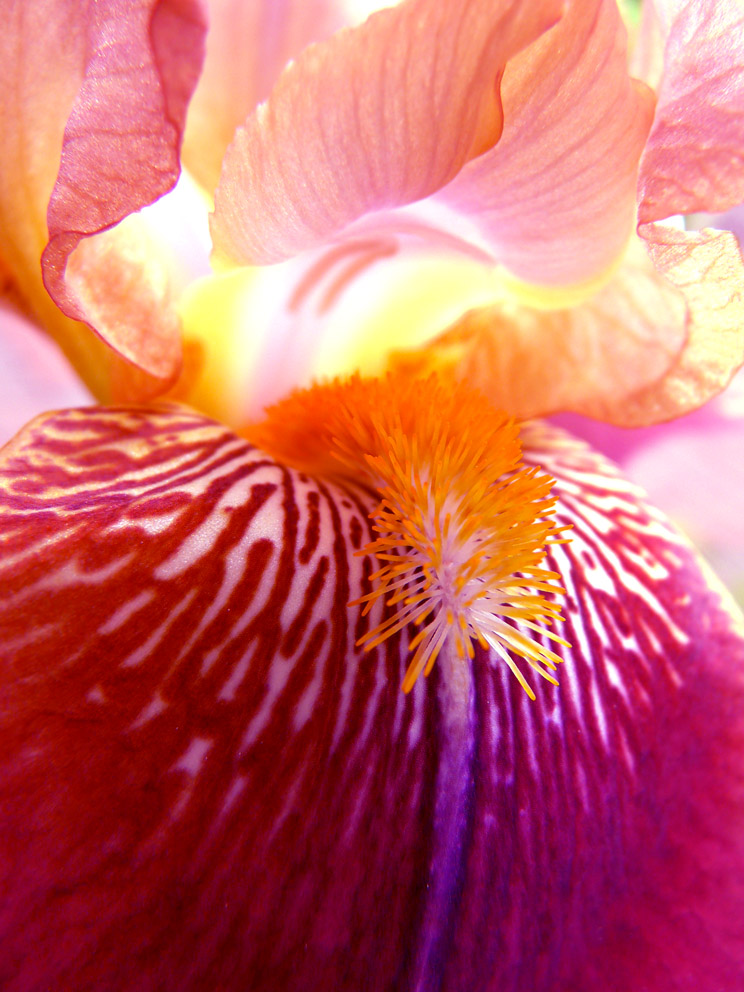 La luce di un iris