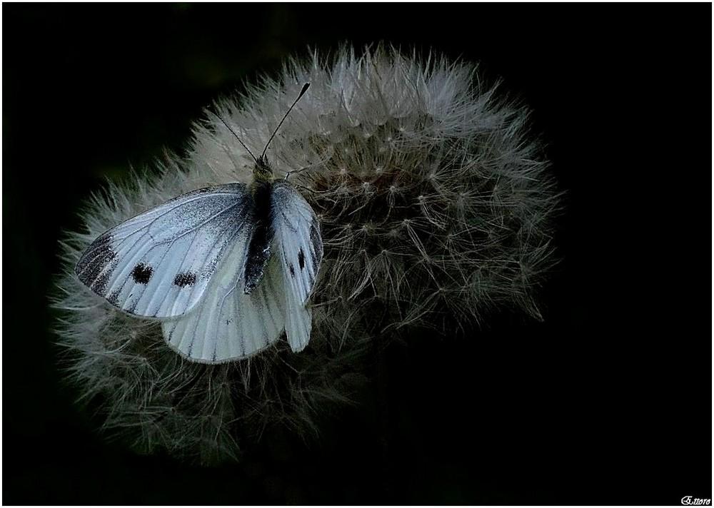La luce sulle ali