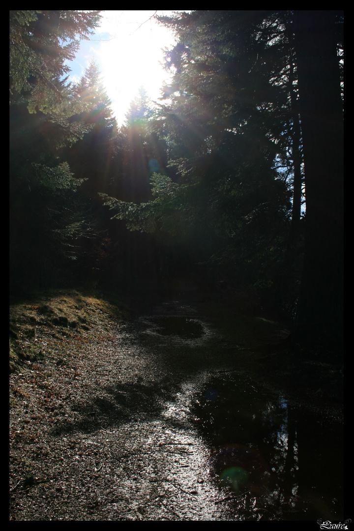 La lumière au bout du chemin