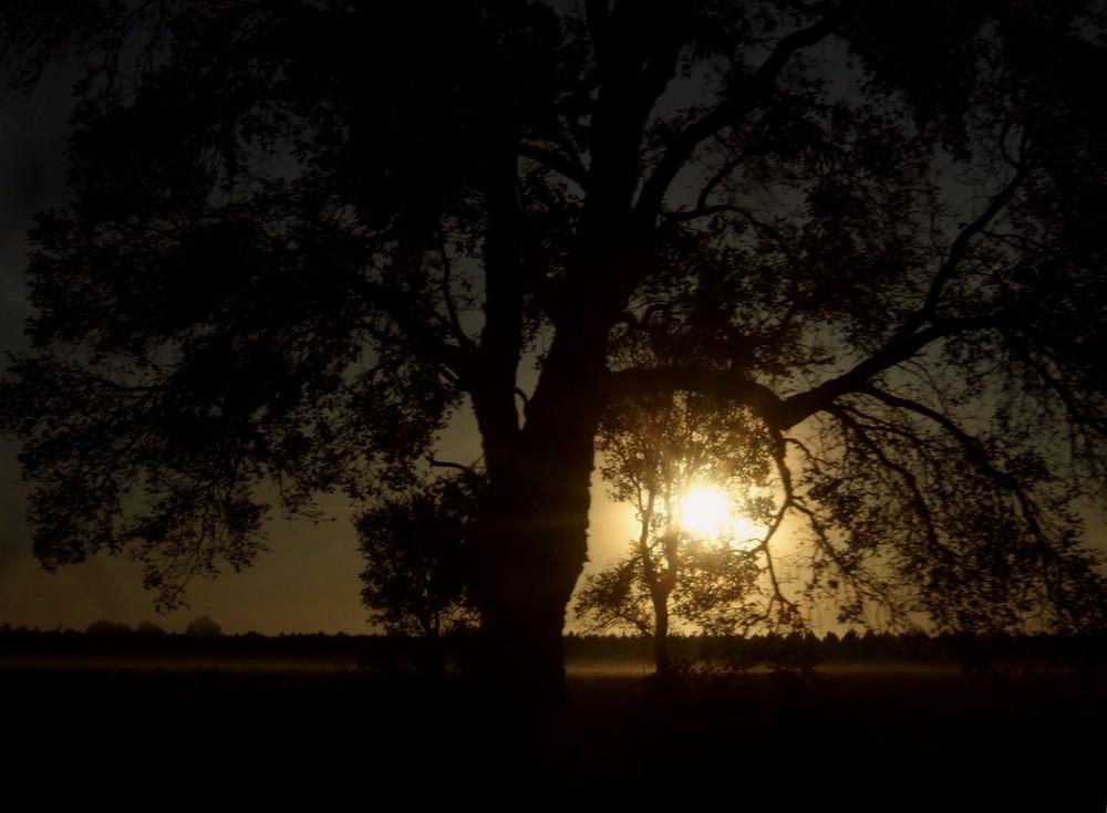La lumière de l'arbre .